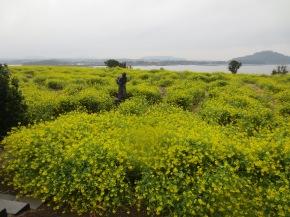 Episode 21 : Jeju, Island in the sun (oupresque)